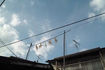 宮浦港周辺J.Yama021.JPG