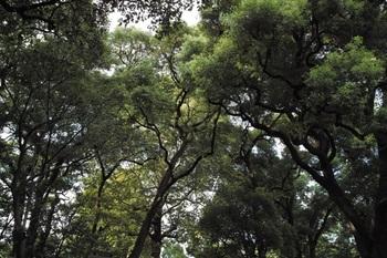 日比谷公園2009.09J.Yama51.JPG