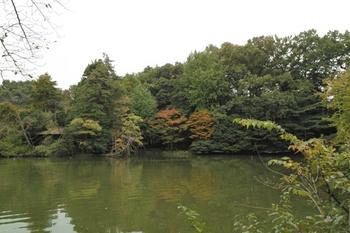 都立善福寺公園(トロールの森)2009.11.05J.Yama50.JPG